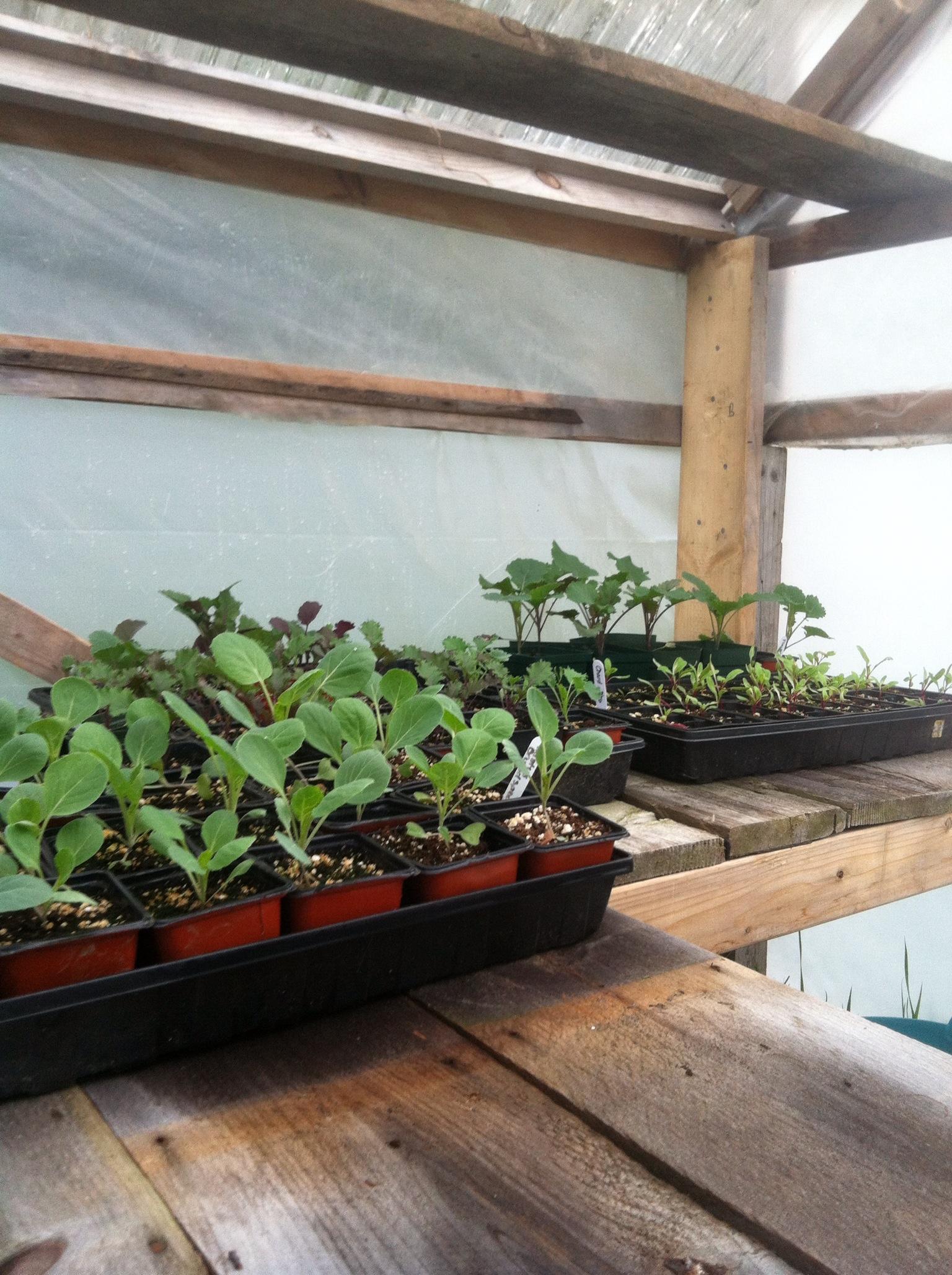 Seedlings in Greenhouse